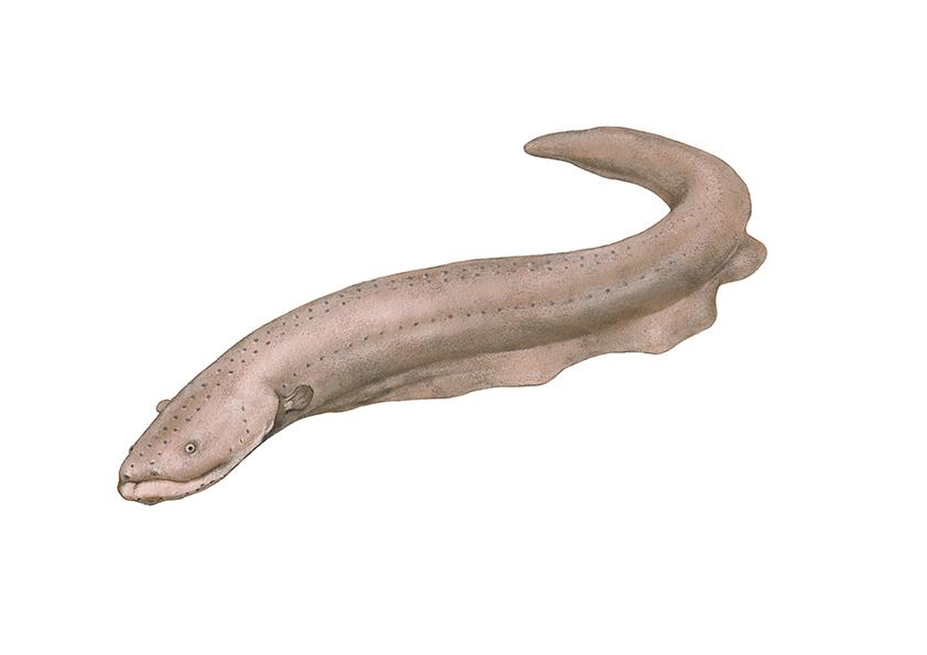 전기뱀장어